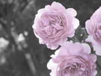 秘密の花園 アイコン画像